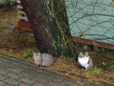 Kol Šventojoje nėra uosto, žiemą čia karaliauja tik būrys išalkusių kačių.