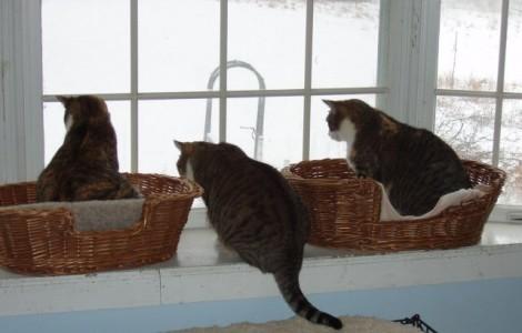 Pardavėjos Lietuvoje klientus stebi kaip katės paukščiukus.